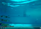 When Swimming is Accidentally Art (VIDEO)