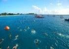 courtesy of Swim Barbados